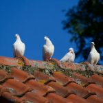 signs_that_your_roof_needs_a roof restoration